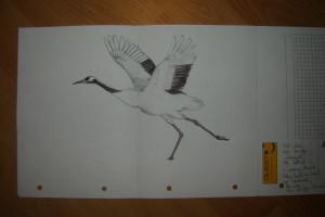 here a birdie...
